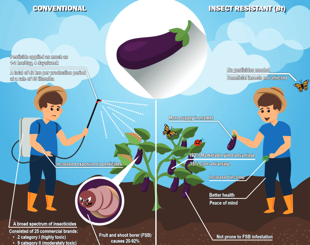 screenshot which eggplant will you choose pdf