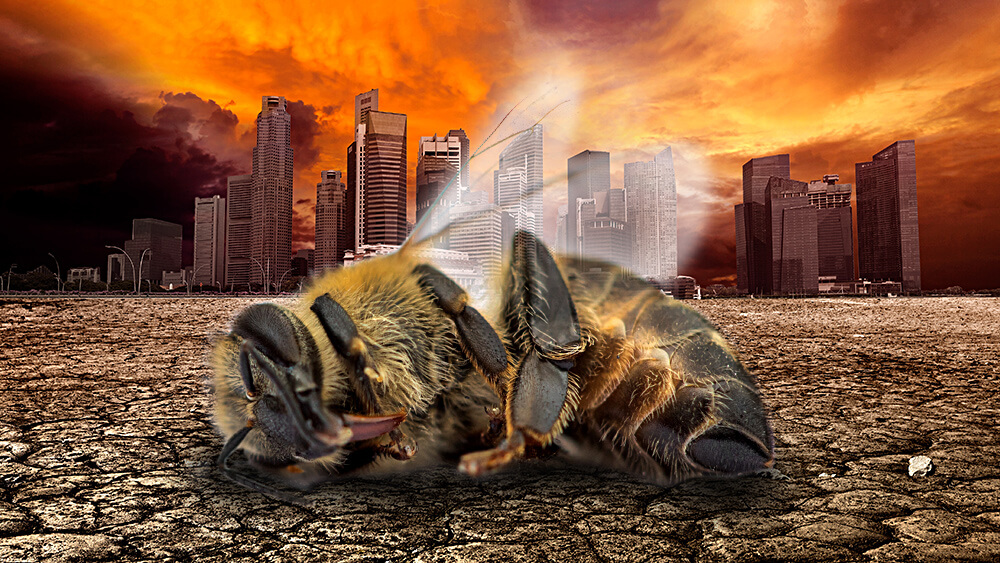 dead bee desolate city