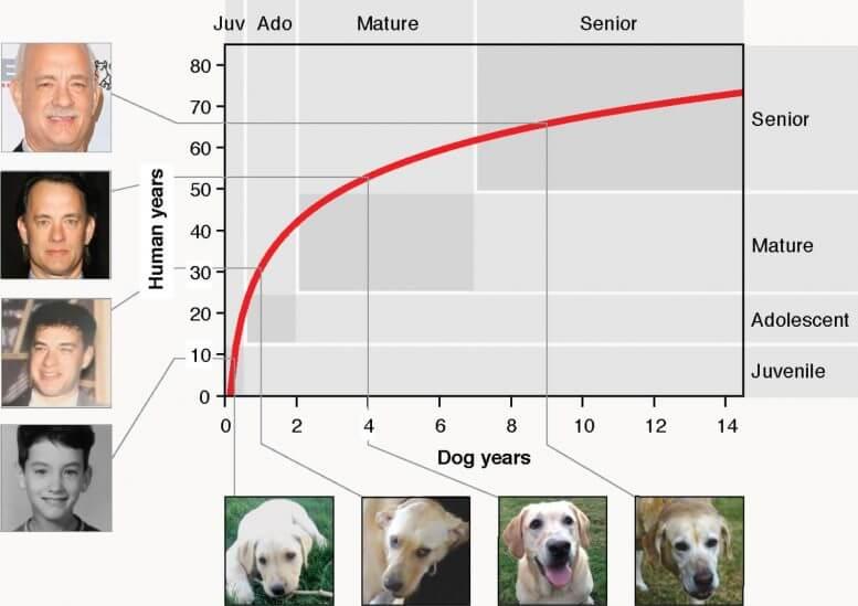 dog age chart x