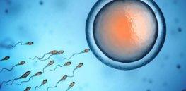 istock sperm egg alfaisal