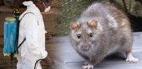 lassa fever what is it deadly the disease can cause dangerous epidemics