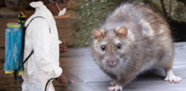 lassa fever what is it deadly the disease can cause dangerous epidemics