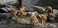 neanderthal burial scene shanidar cave