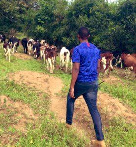 baker the herder