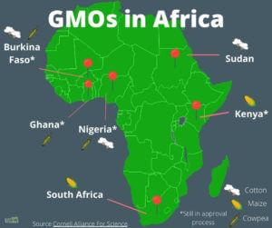 gm crops africa x