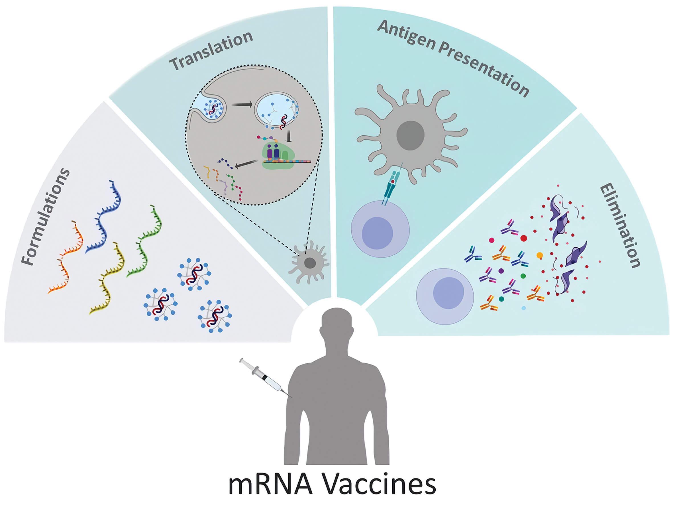 immunotherapy baylorcollegemedicine pollett mrnavaccines