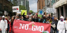 march against monsanto vancouver rosaleeyagihara