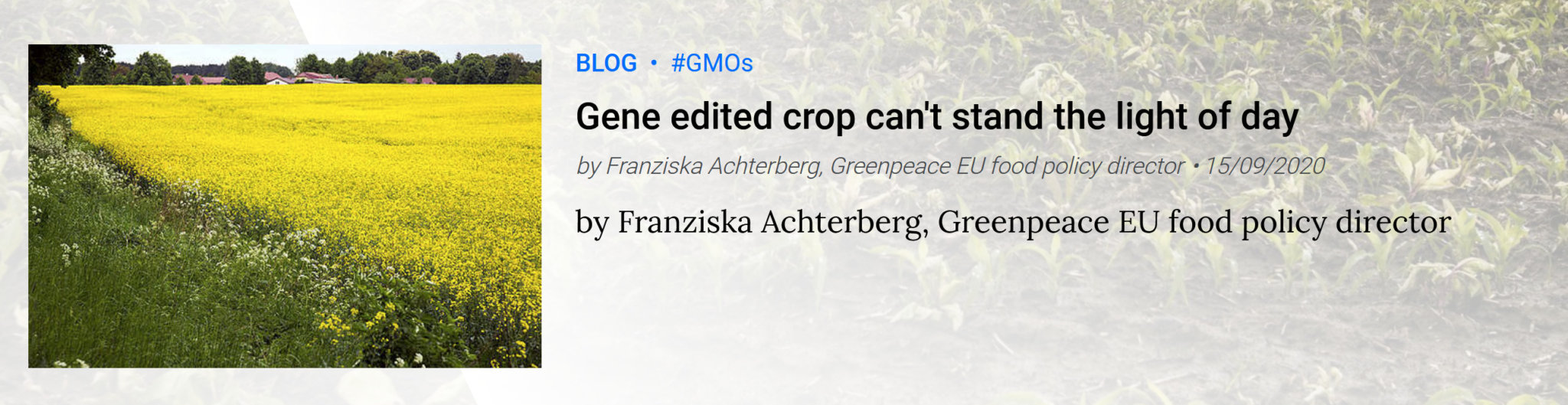 Viewpoint: Anti-GMO groups exploit COVID to block access to biotech crops