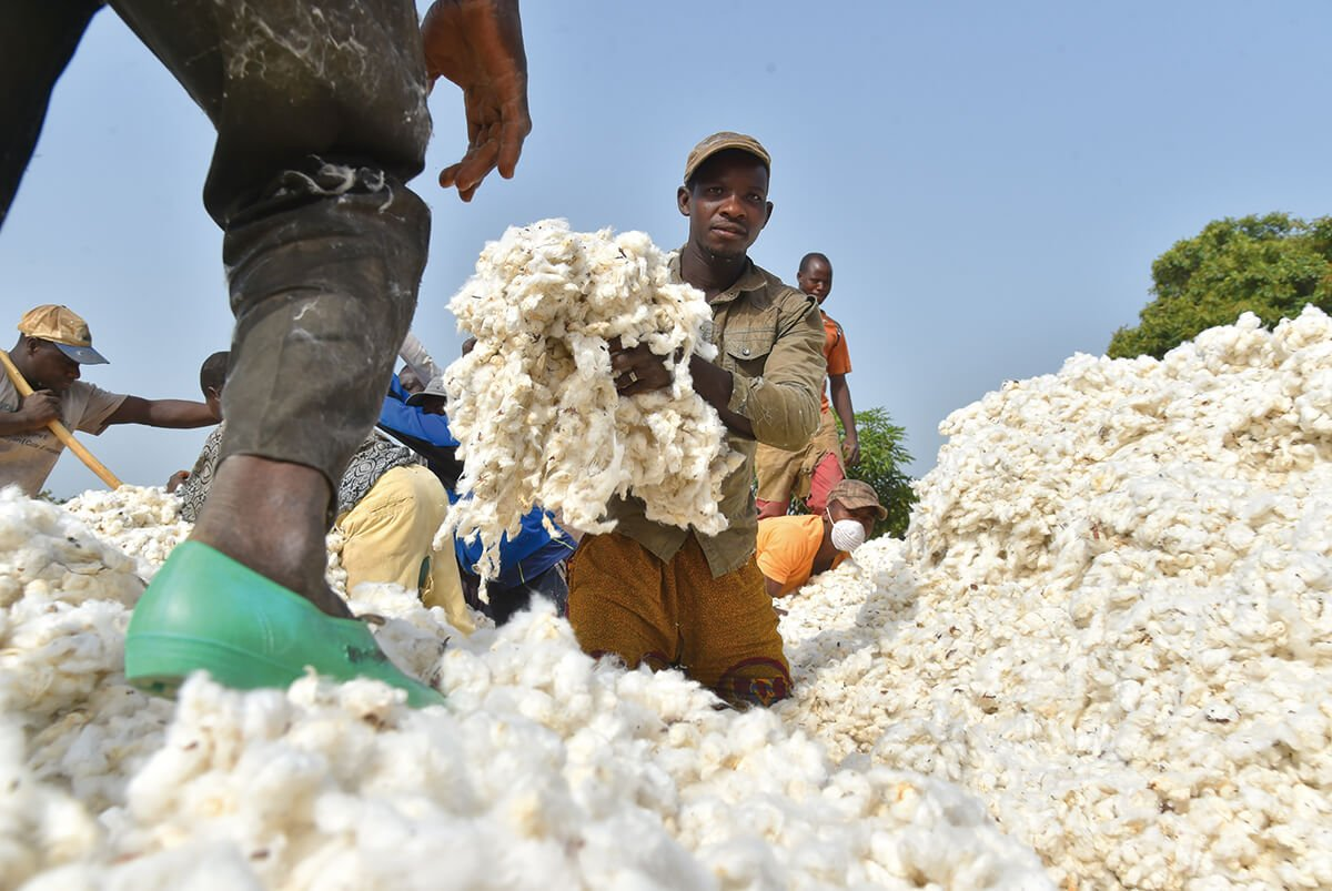 africas cotton industry looks to the future
