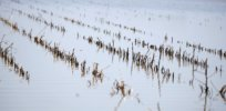 Global crop yields projected to drop as temperatures rise, new study finds