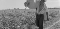 Mexico's cotton production could 'disappear' in 2021 with GM, insect-resistant Bt seed banned