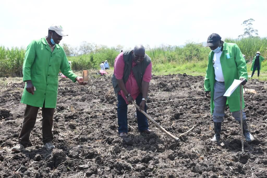 james karanja pi tela maize kalro director general dr eliud keriger and a governmnet official lead the planting excercise in one of selected fields