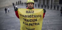 Peru extends GMO crop cultivation ban for 15 years, after months of intense debate