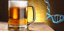 Beer that combats cancer? Czech scientists have developed gene edited therapeutic hops but EU biotech restrictions block rollout