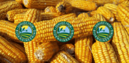 With bioengineered food labels showing up in stores, here's what you should know about GMOs