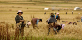 China makes progress on biotech crop development in race to achieve food self-sufficiency