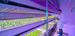 Could lab-grown plants offset agriculture's environmental footprint?