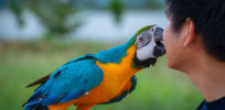 Birds of play? How social engagement plays a role in brain development in birds, and maybe humans