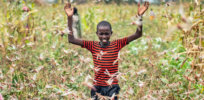New crop-destroying locust swarms hitting East Africa 'nearly every day,' UN warns in renewed call to fight major food security threat