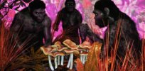 Did magic mushrooms and other hallucinogens fuel human evolution?