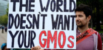 Podcast: Debunking 'dangerous' anti-GMO misinformation that harms developing countries