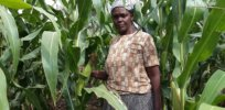 GM, insect-resistant, Bt corn could reach Kenyan farms in 2021 — and may help double crop yields