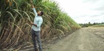 Bolivia looks to GM soybeans, cotton and sugar cane to boost flagging agricultural production