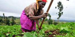 GMO 'scarecrow': What's keeping Africa from embracing genetically engineered crops?