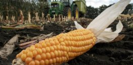 Video: 'One more tool in our toolbox': The case for crop biotechnology