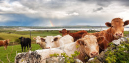 Earth-friendly beef: How sustainable grazing practices can protect soil, water, and biodiversity