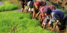 Saving Africa's agroecological food baskets from the agroecology movement