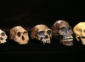 Human evolutionary timeline: Key moments in the emergence of our species