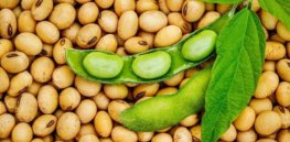 CRISPR could help produce allergen-free soybeans. Here's how it works