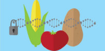 'Stop conflating all biotechnology with genetic engineering': The case for more refined USDA regulations