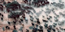 Viewpoint: Livestock—an underrated solution to climate change