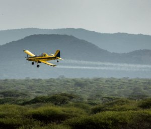 Africa cracks down on ravenous locust swarms by ignoring Greenpeace's anti-pesticide rhetoric
