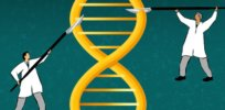 Infographic: What are TALENs? Another important gene-editing tool to boost sustainable farming