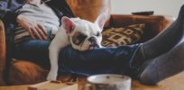 Are humans wired by evolution to be couch potatoes? This evolutionary biologist believes so