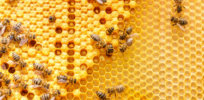 Viewpoint: USDA data show the predicted 'Beepocalypse' has been postponed another year