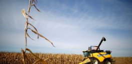 Viewpoint: 'Science-based trade' — Why the US should dispute Mexico's glyphosate, GM corn bans at the WTO