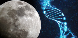 Lunar DNA ark? Scientists want to cryogenically store the genes of 6.7 million species on the moon, just in case