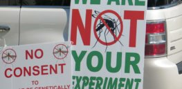 April Florida Keys release of GMO mosquitoes engineered to curtail Zika, dengue and malaria on track despite protests