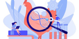 Viewpoint: FDA's overregulation of gene-edited animals hinders innovation and harms consumers