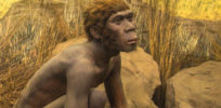 Hobbit-sized humans appear to have lived as recently as 50,000 years ago
