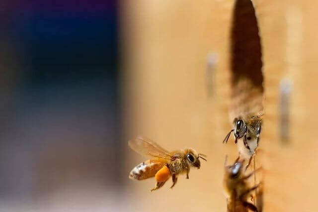 Viewpoint: Phase out neonicotinoids? Walmart's new farmer mandates promote alarmist misinformation about bee health