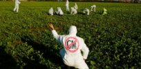 Viewpoint: GMO misinformation—How 'pseudoscience and romanticization of premodern agriculture' undermine food sustainability