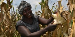Central Uganda's new leadership pledges support for GM crops: 'We have a cardinal role to ensure food security'