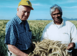The Green Revolution was built on manipulating genes to breed higher-yielding, disease resistant crops. Here's an ode to one of its pioneers, Sanjaya Rajaram