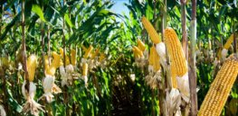 While COVID held our attention in a vice grip, 2020 brought some major crop biotech breakthroughs