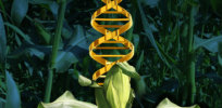 Market for CRISPR-edited crops will be limited by hazy global regulatory environment and societal ambivalence